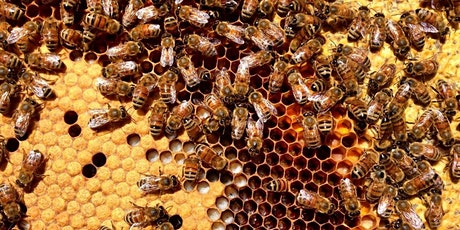 Beekeeping 101: Is Beekeeping For Me? tickets