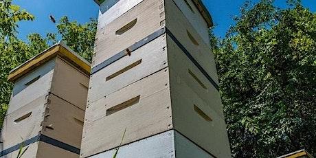 Beekeeping 201: Beekeeping Basics tickets