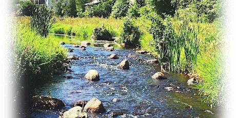 Update on Town Brook Herring Run Restoration Efforts tickets