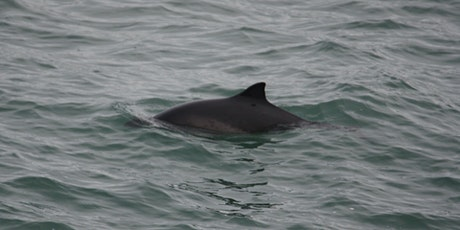 Porpoise Species of the World tickets