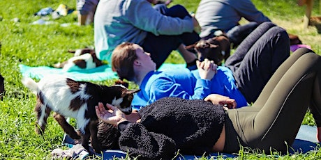 Goat Daddy's Baby Goat Yoga tickets