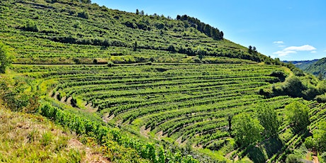 France's Hidden Corner: The Unsung Wines of South West France tickets