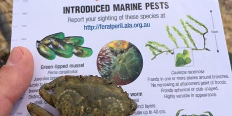 18 March - Feral/ In Peril Species Training - Reef Watch SA tickets