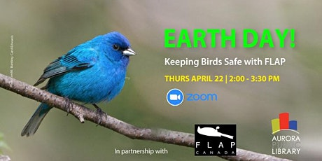 Earth Day: Keeping Birds Safe with FLAP tickets
