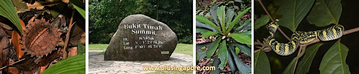 Up Hill and Down Dale - Nature Walk at Bukit Timah image