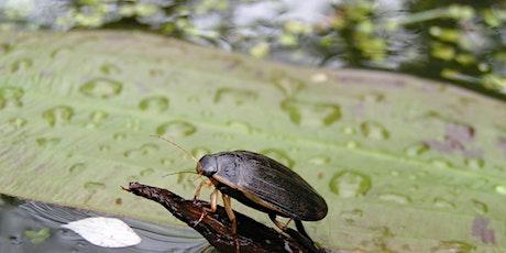 Water Invertebrates tickets