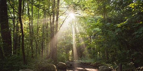 Remotely-Guided Forest Bathing! tickets