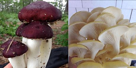 Initiation à la culture des champignons comestibles sous couvert forestier tickets