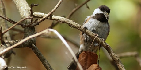 Introduction to Bird-Listening, Online Workshop with the Laguna Foundation tickets