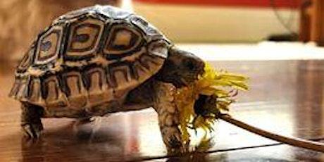 Show Me Reptile & Exotics Show tickets