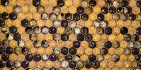 Northern Beaches Beekeepers monthly meeting - European Foulbrood (EFB) tickets