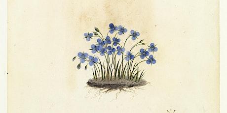 FOTA: Anita Hansen : The Allport's W.B Gould Flower Drawings tickets