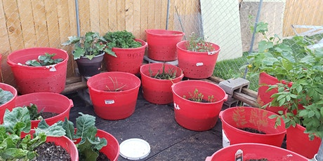 Container Gardening Class Series For Beginners tickets