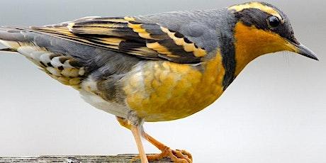 Birding 202: Enjoying Birds at Point Reyes tickets