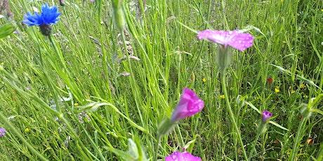 Fingal Wildflowers Masterclass entradas