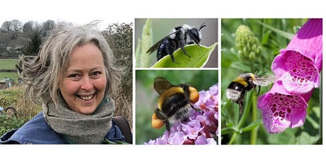 Causes of bees decline ... and what we can do to help them tickets