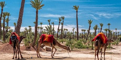 Marrakech Camel Ride in the Palm Grove - Virtual Live Tour biglietti