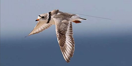 Tracking Shorebirds and Seabirds of the North Atlantic tickets