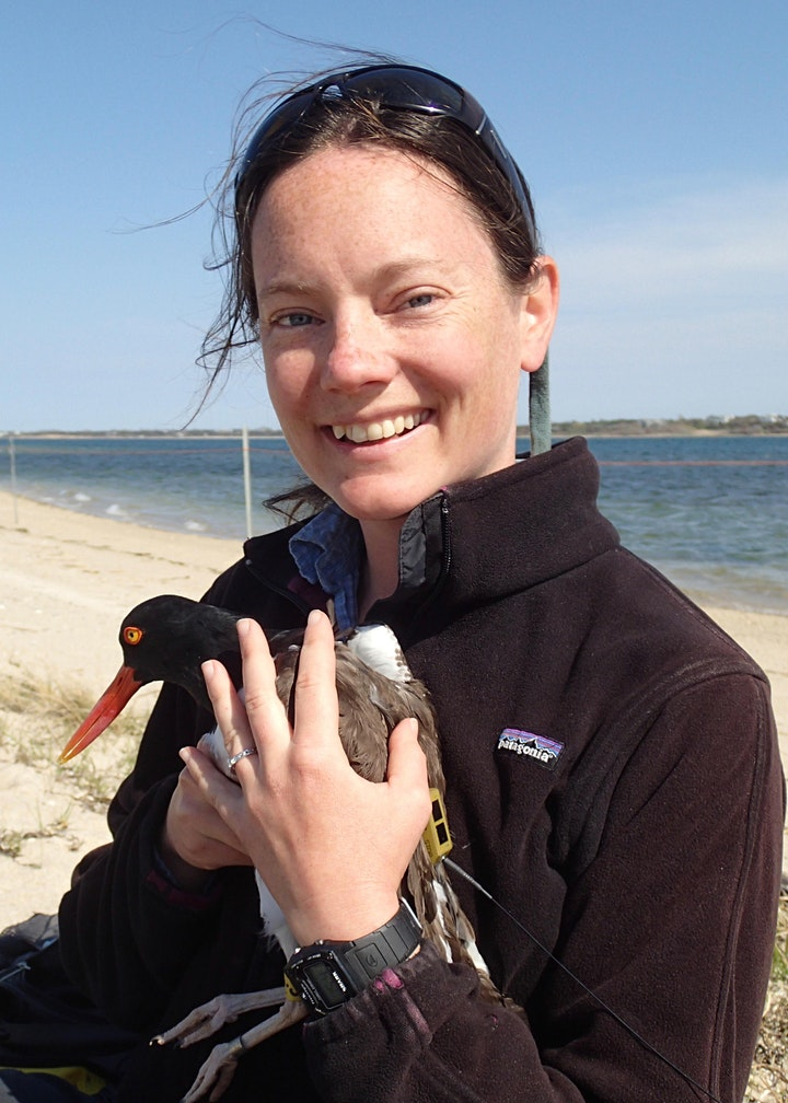 Tracking Shorebirds and Seabirds of the North Atlantic image