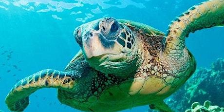 Animal Habitats with Turtle Back Zoo tickets
