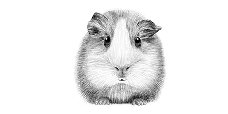 45min Animal Pencil Sketching Art Lesson - Guinea Pig@11AM (Ages 6+) tickets