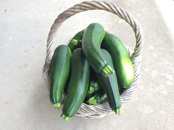 Coachwood Nursery Organic Gardening Guided Tour & Workshop image