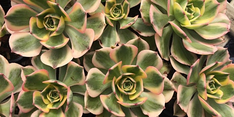 Coachwood Nursery Succulent Workshop tickets