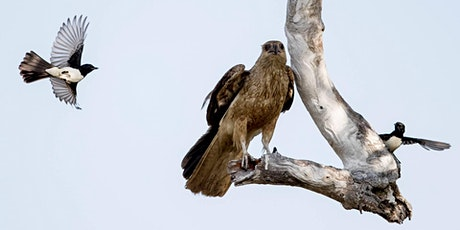 Healesville Sanctuary Birds &  Wildlife Photography Masterclass tickets