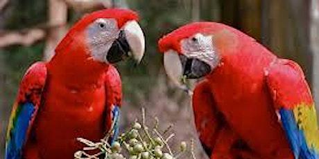 Southeast Exotic Bird Fair Plant City tickets