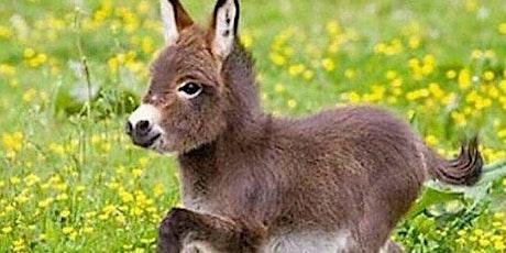 Bishopstoke Churches Easter Donkey Trail tickets