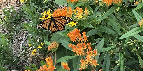 Native Plant Gardening for Beginners tickets