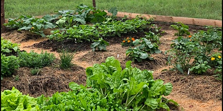 Bethel Strong Community Garden - BETHEL UNIVERSITY tickets