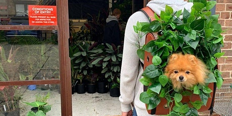 Melbourne - Huge Indoor Plant Warehouse Sale - Plants + Pups Sale! tickets