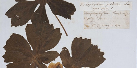 Botany in 18th Century Cambridge: A first look inside the Martyn collection billets