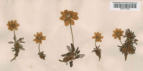 University Herbarium Hack: help us unlock our collections - from your home! tickets