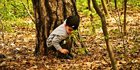 Bush School 4: Wonderful world of TREES! (5-12 years old) tickets