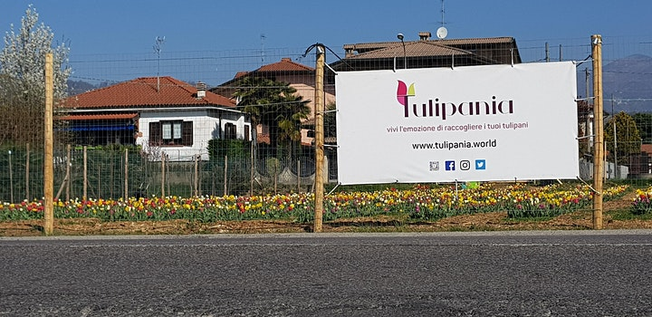 Immagine #Tulipania2021 Cogli la primavera con le tue mani-APERTI PER RACCOLTA FIORI