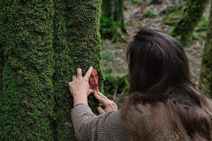 Woodland Wellness image