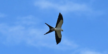 Evenings at the Homestead: Conservation Biology of Swallow-tailed Kites tickets