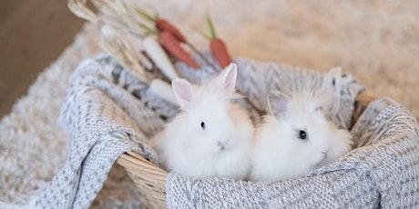 Bunny Photos (Perkins/Highland) tickets