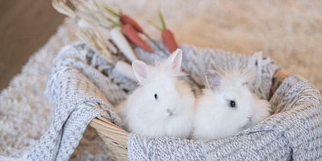 Bunny Photos (Perkins/Highland) tickets