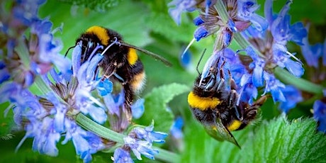 Why our Gardens should change- Adapting our Gardens for Insects biglietti