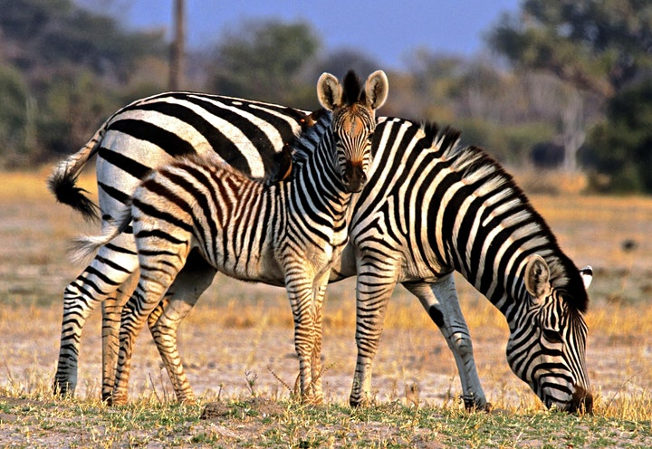 How to Plan a Meaningful Family Safari in the Era of COVID image