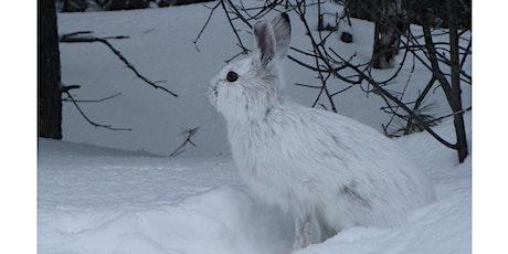 Les animaux en hiver billets