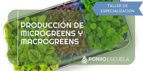 Producción de Microgreens y Macrogreens entradas