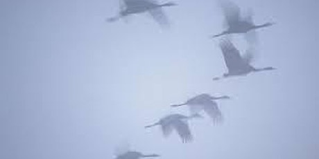 Migratory Birds tickets