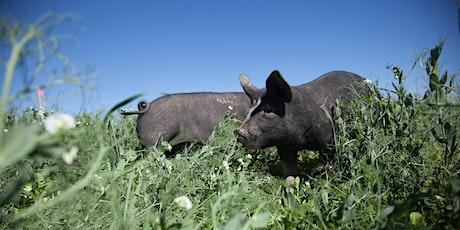 Integrating Hog Grazing and Vegetable Production biglietti