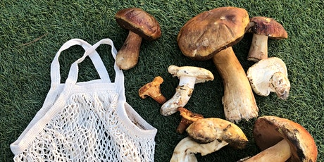 Guided Mushroom Walk in Monterey tickets