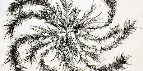 Seniors' Festival - Seaweed Arboretum exhibition tour tickets