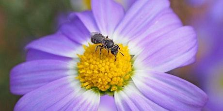 Native Bee Presentation at Araluen Botanic Park tickets
